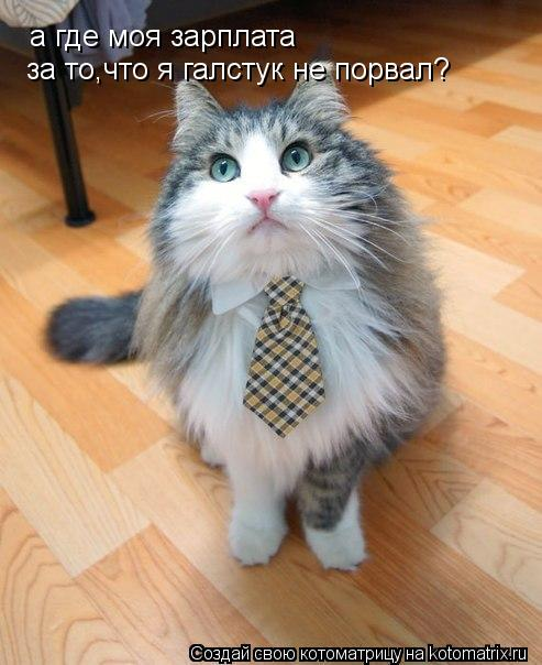 Котоматрица: а где моя зарплата  за то,что я галстук не порвал?