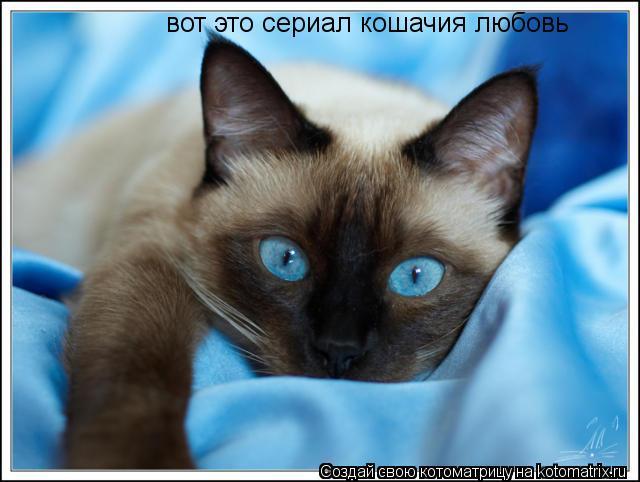Котоматрица: вот это сериал кошачия любовь