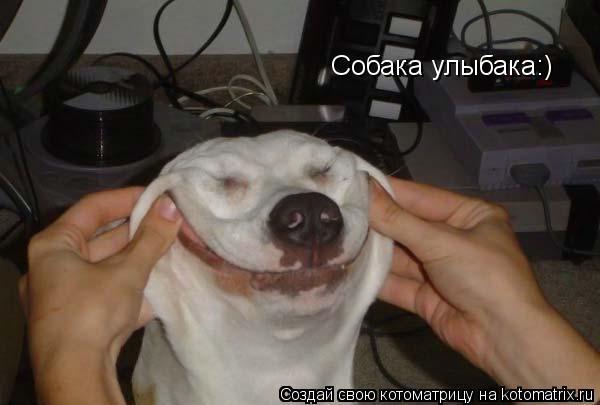 Котоматрица: Собака улыбака:)