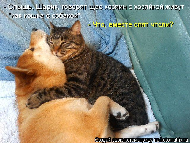 """Котоматрица: - Слышь, Шарик, говорят щас хозяин с хозяйкой живут """"как кошка с собакой"""". - Что, вместе спят чтоли?"""