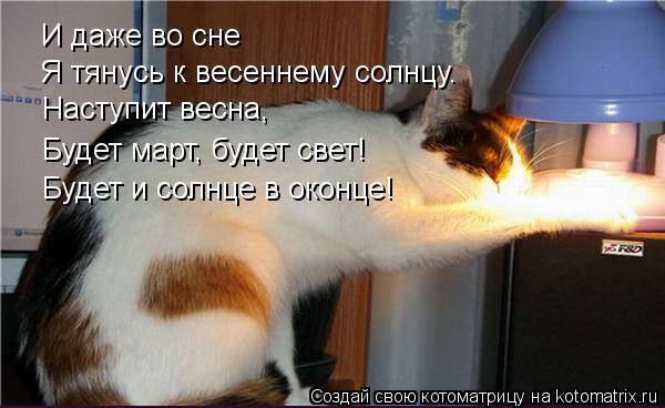 Котоматрица: И даже во сне Я тянусь к весеннему солнцу. Наступит весна, Будет март, будет свет! Будет и солнце в оконце!