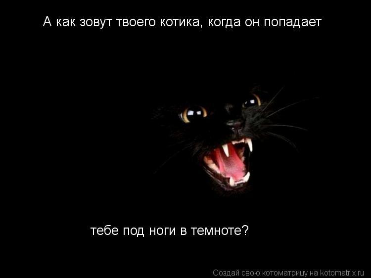 Котоматрица: А как зовут твоего котика, когда он попадает  тебе под ноги в темноте?