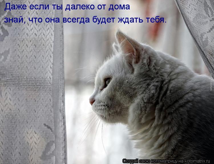 Котоматрица: Даже если ты далеко от дома знай, что она всегда будет ждать тебя.