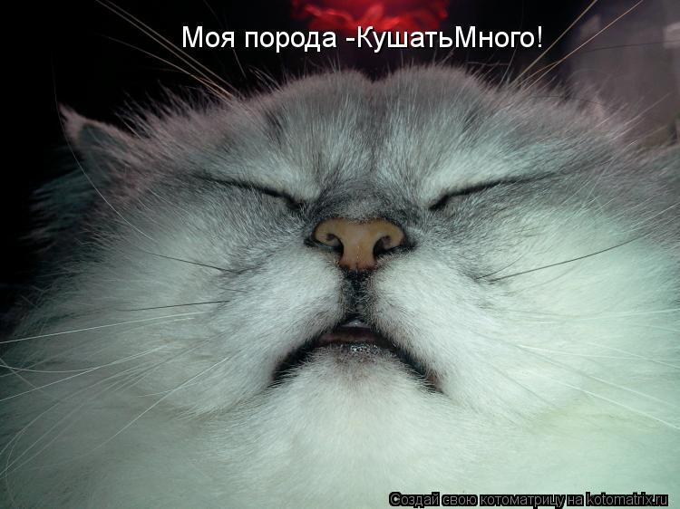 Котоматрица: Моя порода -КушатьМного!