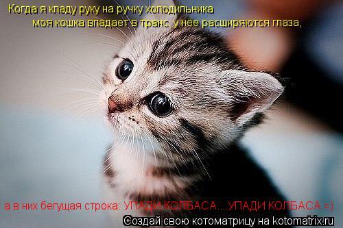 Котоматрица: Когда я кладу руку на ручку холодильника моя кошка впадает в транс, у нее расширяются глаза, а в них бегущая строка: УПАДИ КОЛБАСА....УПАДИ КО