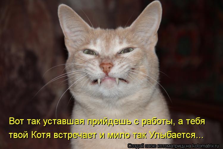 Котоматрица: Вот так уставшая прийдешь с работы, а тебя    твой Котя встречает и мило так Улыбается...