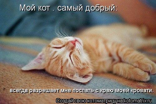 Котоматрица: Мой кот — самый добрый:  всегда разрешает мне поспать с краю моей кровати.