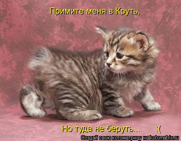 Котоматрица: Примите меня в Круть, Но туда не беруть...      :(