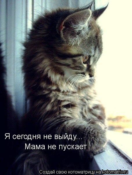 Котоматрица: Я сегодня не выйду... Мама не пускает