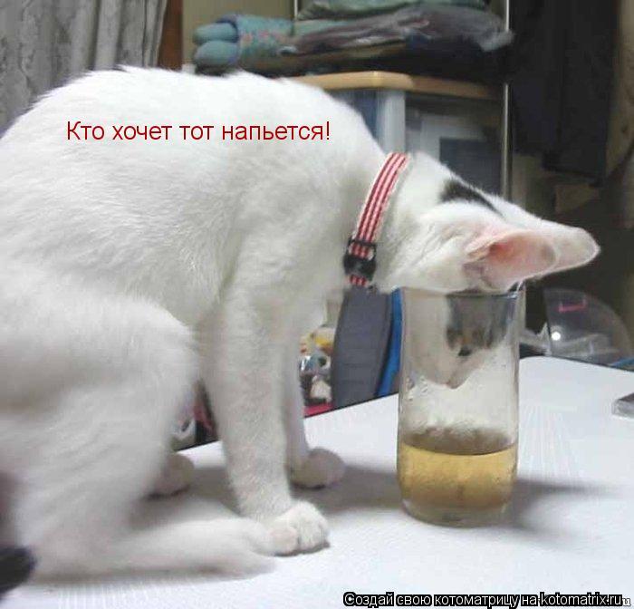Котоматрица: Кто хочет тот напьется!