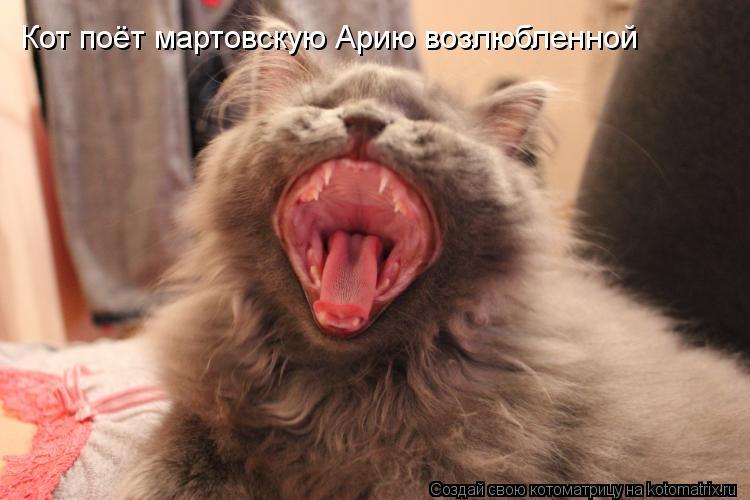 Котоматрица: Кот поёт мартовскую Арию возлюбленной