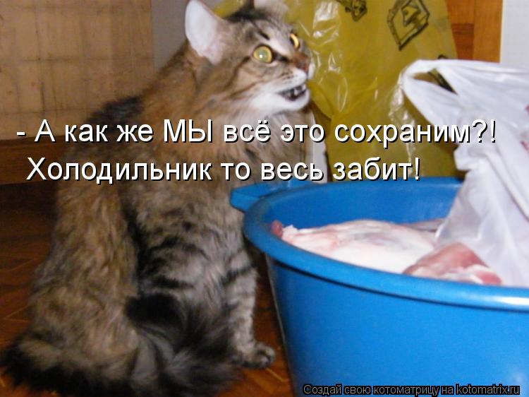 Котоматрица: - А как же МЫ всё это сохраним?! Холодильник то весь забит!