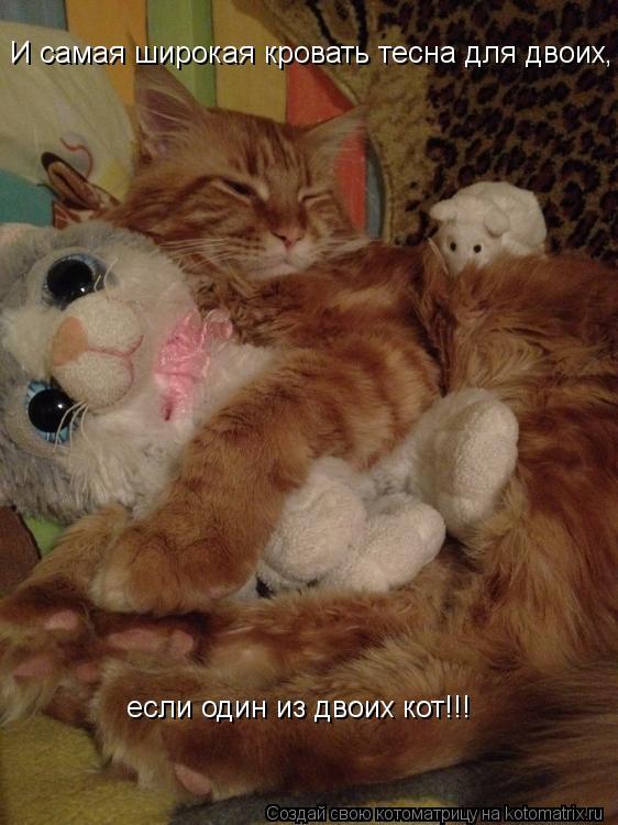 Котоматрица: И самая широкая кровать тесна для двоих, если один из этих двоих - кот! И самая широкая кровать тесна для двоих,   если один из двоих кот!!!