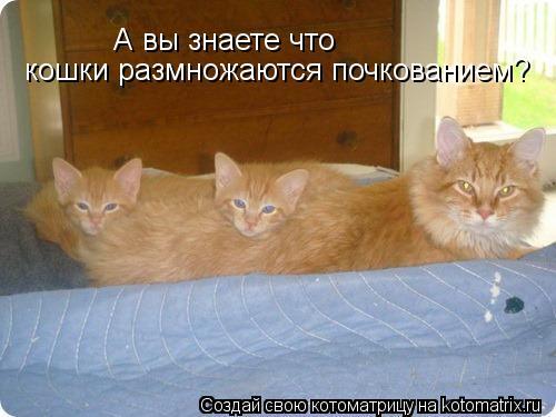 Котоматрица: А вы знаете что кошки размножаются почкованием?