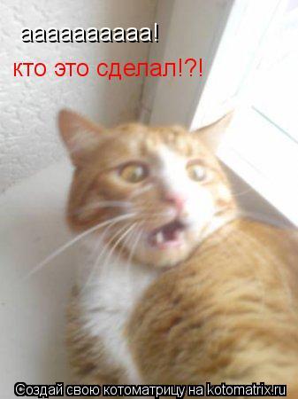 Котоматрица: аааааааааа! кто это сделал!?!