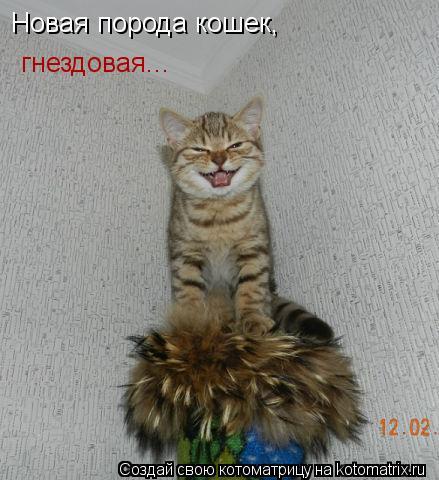 Котоматрица: Новая порода кошек, гнездовая...