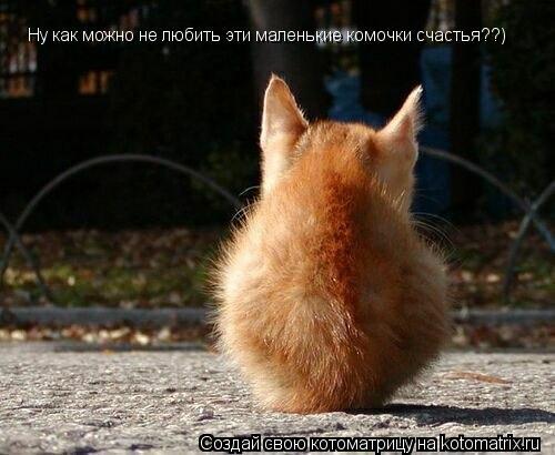 Котоматрица: Ну как можно не любить эти маленькие комочки счастья??)