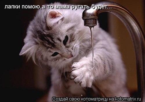 Котоматрица: лапки помою,а то мама ругать будет...