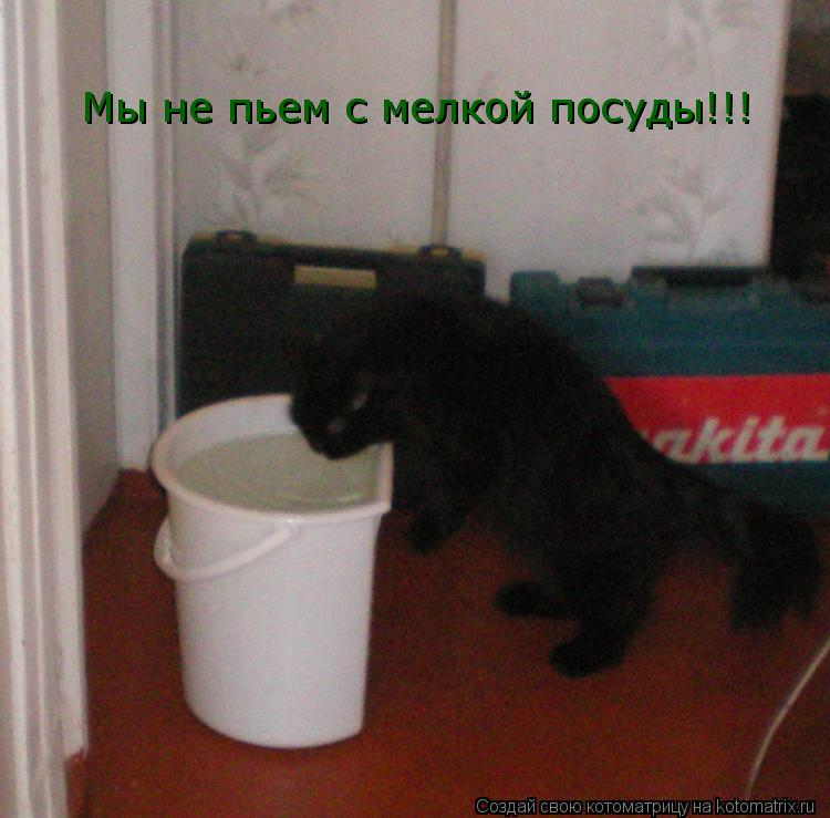 Котоматрица: Мы не пьем с мелкой посуды!!!
