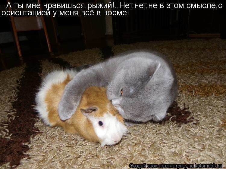Котоматрица: --А ты мне нравишься,рыжий!..Нет,нет,не в этом смысле,с ориентацией у меня всё в норме!