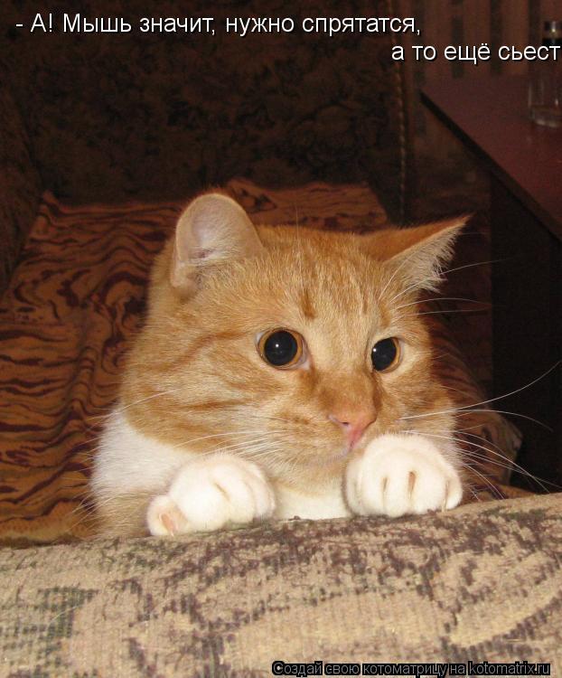 Котоматрица: - А! Мышь значит, нужно спрятатся,  а то ещё сьест!