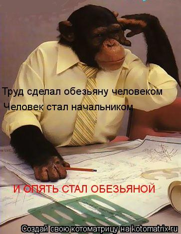 Котоматрица: Труд сделал обезьяну человеком Человек стал начальником И ОПЯТЬ СТАЛ ОБЕЗЬЯНОЙ