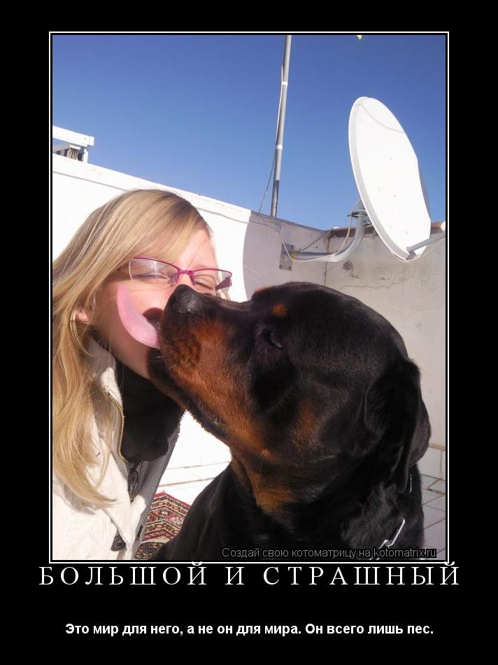 Котоматрица: Большой и страшный Это мир для него, а не он для мира. Он всего лишь пес.