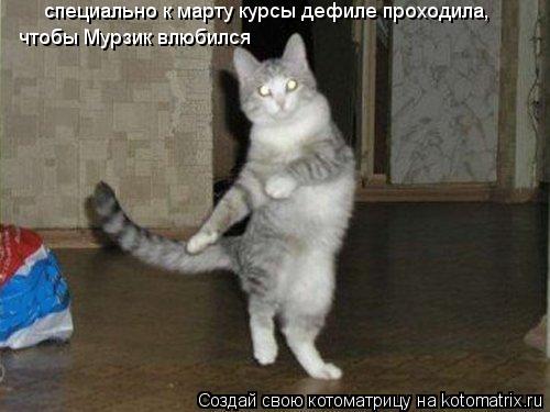 Котоматрица: специально к марту курсы дефиле проходила,  чтобы Мурзик влюбился