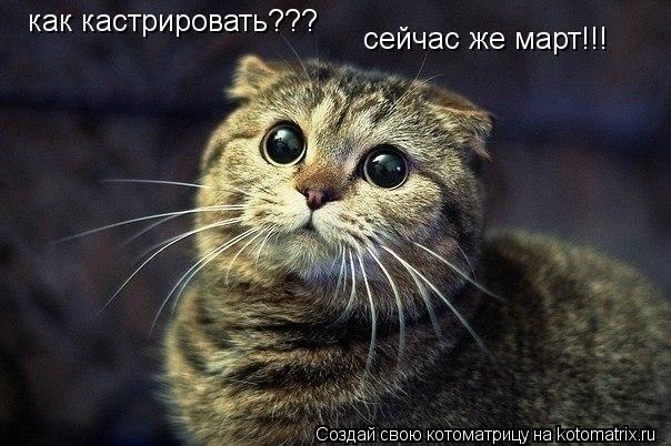 Котоматрица: как кастрировать??? сейчас же март!!!