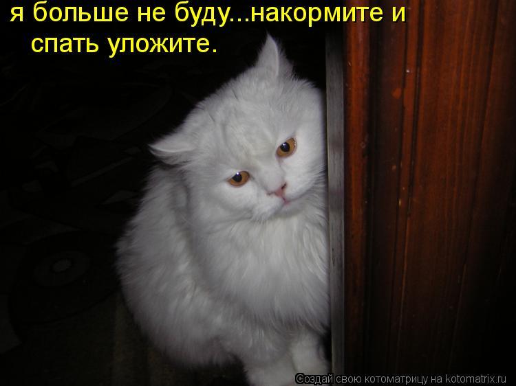 Котоматрица: я больше не буду...накормите и  спать уложите.