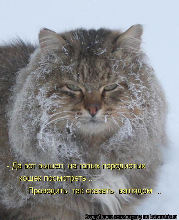 Котоматрица: - Да вот вышел, на голых породистых кошек посмотреть ...  Проводить, так сказать, взглядом ...