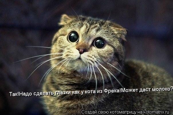 Котоматрица: Так!Надо сделать глазки как у кота из Фрека!Может даст молоко?