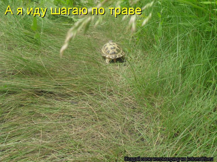 Котоматрица: А я иду шагаю по траве