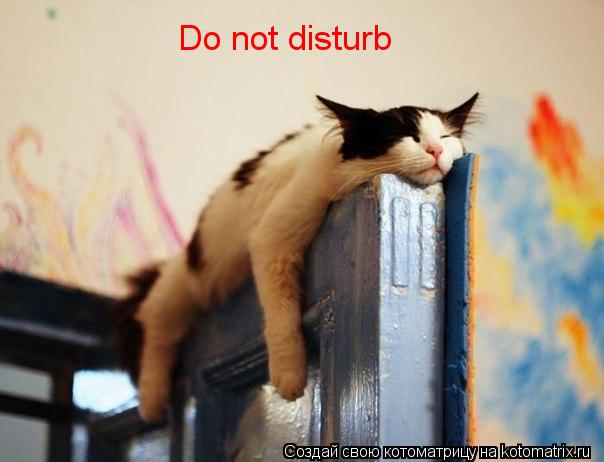Котоматрица: Do not disturb