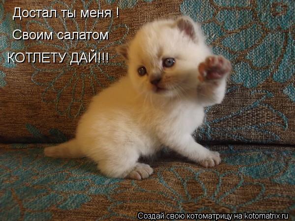 Котоматрица: Достал ты меня ! Своим салатом   КОТЛЕТУ ДАЙ!!!