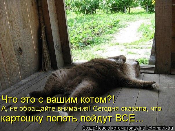 Котоматрица: Что это с вашим котом?! А, не обращайте внимания! Сегодня сказала, что картошку полоть пойдут ВСЕ...