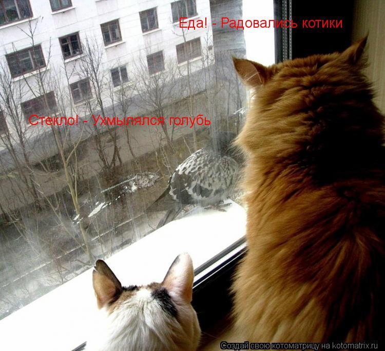 Котоматрица: Еда! - Радовались котики Стекло! - Ухмылялся голубь