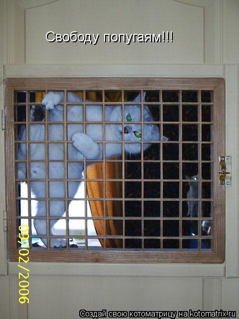 Котоматрица: Свободу попугаям!!!