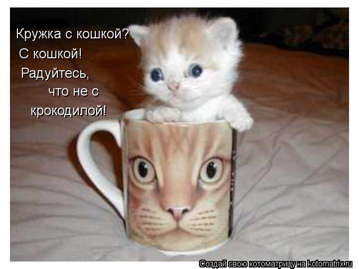 Котоматрица: Кружка с кошкой? С кошкой! Радуйтесь,  что не с крокодилой!