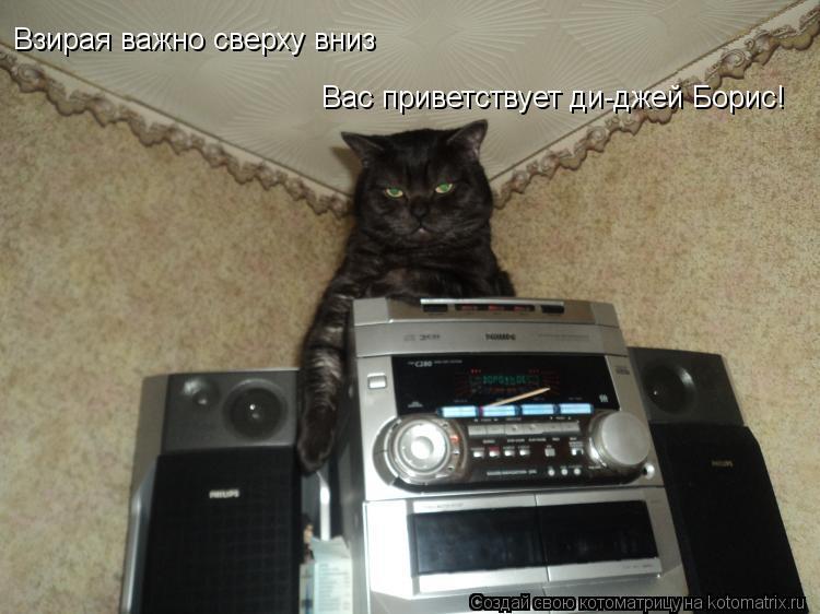 Котоматрица: Взирая важно сверху вниз Вас приветствует ди-джей Борис!