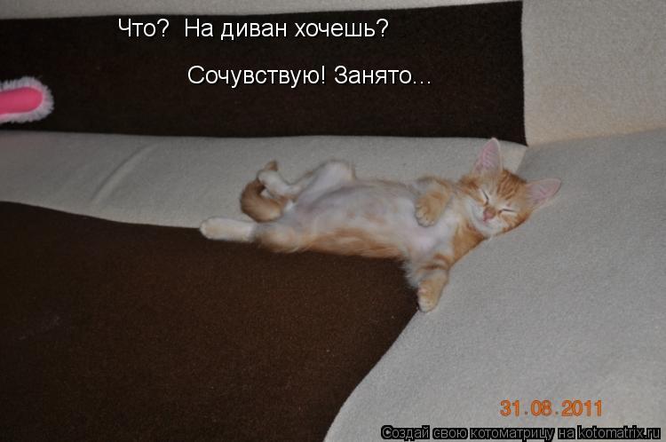 Котоматрица: Сочувствую! Занято... Что?  На диван хочешь?