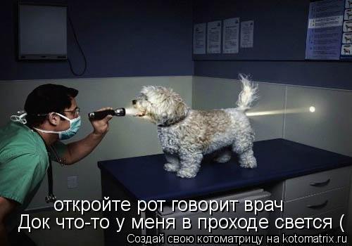Котоматрица: откройте рот говорит врач откройте рот говорит врач Док что-то у меня в проходе свется (