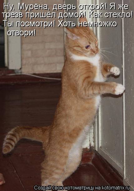 Котоматрица: Ну, Мурёна, дверь открой! Я же  трезв пришёл домой! Как стекло! Ты посмотри!  Ты посмотри! Хоть немножко  отвори!