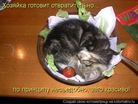 Котоматрица: Хозяйка готовит отвратительно... по принципу несъедобно, зато красиво!