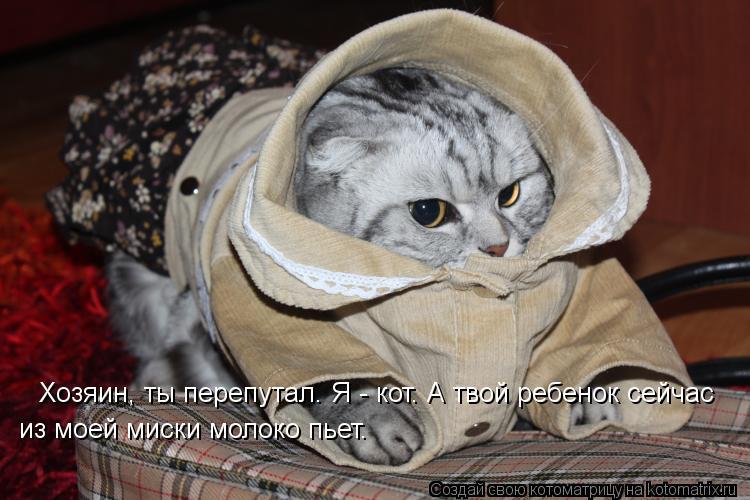 Котоматрица: Хозяин, ты перепутал. Я - кот. А твой ребенок сейчас   из моей миски молоко пьет.