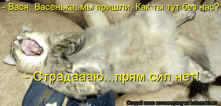Котоматрица - - Вася, Васенька, мы пришли. Как ты тут без нас? - Страдаааю...прям си