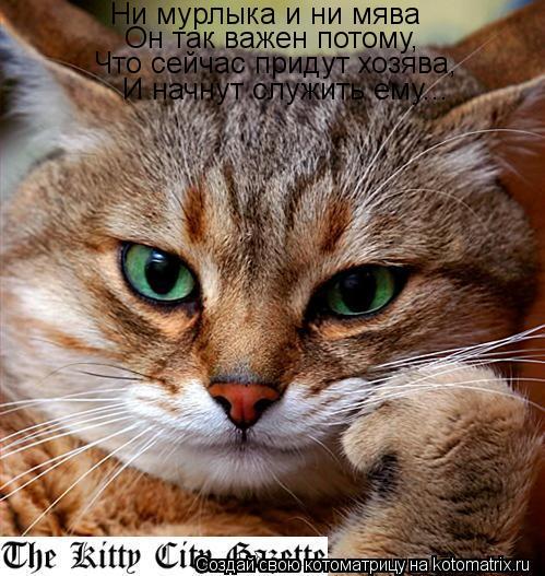Котоматрица: Ни мурлыка и ни мява Он так важен потому,  Что сейчас придут хозява,  И начнут служить ему...