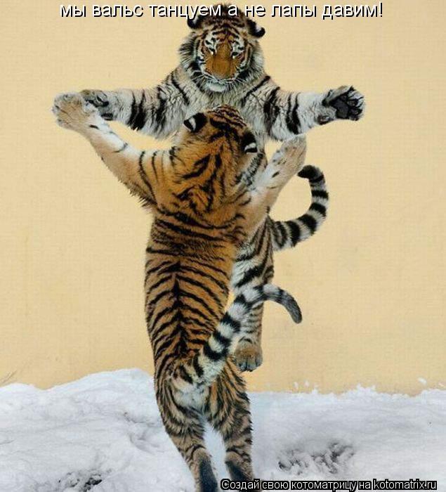 Котоматрица: мы вальс танцуем а не лапы давим!