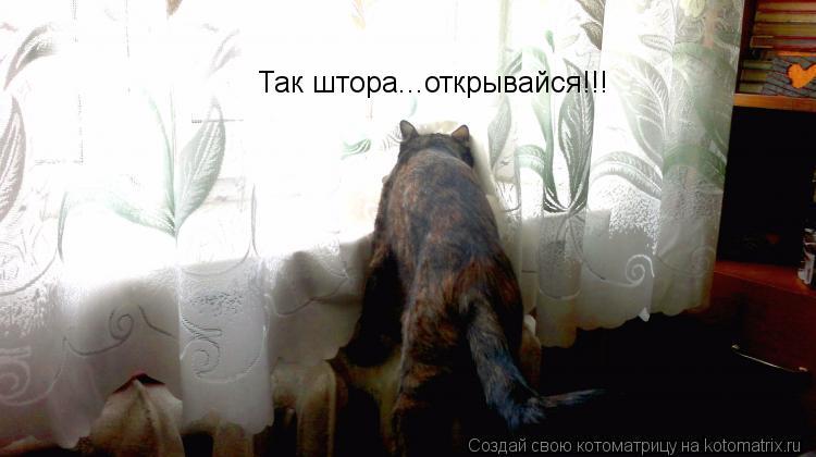 Котоматрица: Так штора...открывайся!!!