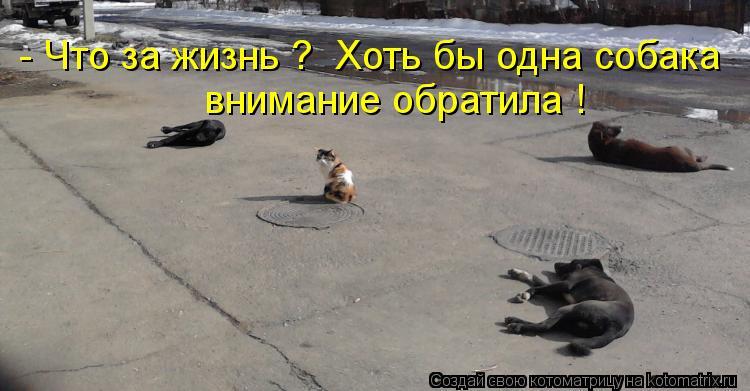 Котоматрица: - Что за жизнь ?  Хоть бы одна собака  внимание обратила !
